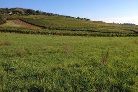 Terrain constructible à Moroges à vendre pour votre projet de construction de maison individuelle neuve RT 2012 avec bourgogne bâtir