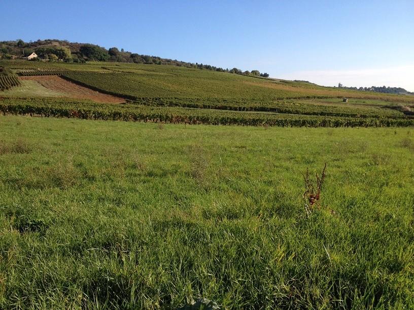 Terrain constructible moroges bourgogne b tir for Bourgogne batir